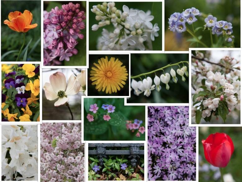 jpg collage flowers